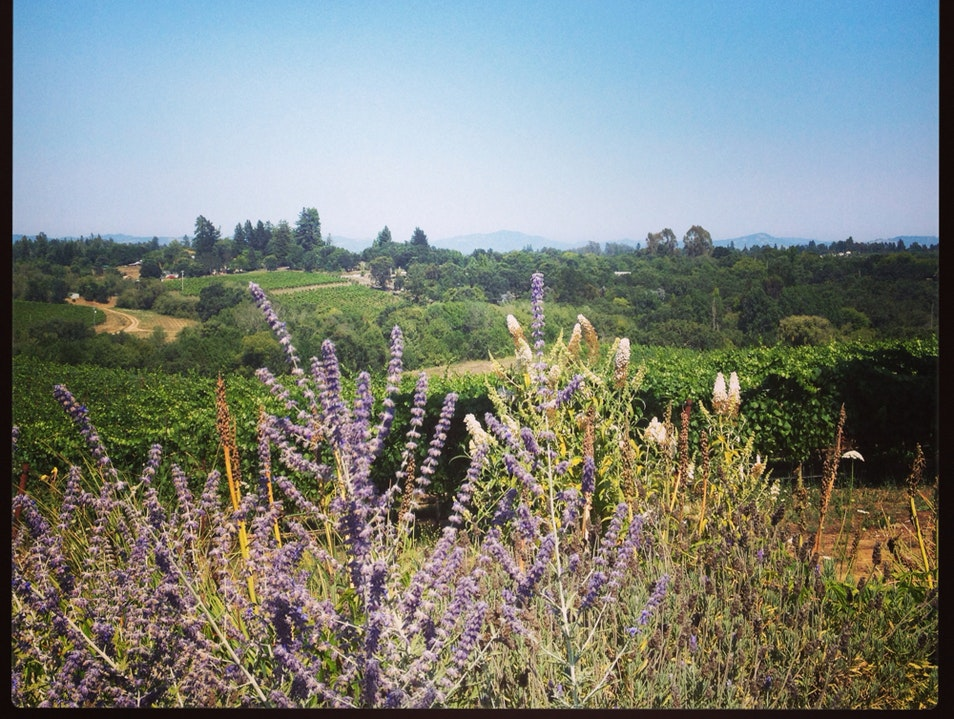 Go For The Views, Stay For The Wine Sebastopol California United States