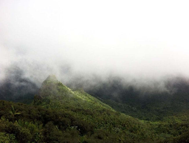 Inside a Cloud at El Yunque