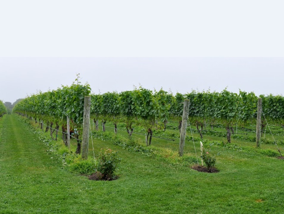 The Most Beautiful Vineyard in Hamptons' South Fork Sagaponack New York United States
