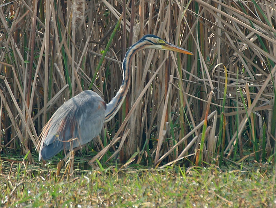 Early Risers Unite at Sultanpur Bird Sanctuary