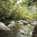 Daintree Rainforest Maxwelton  Australia
