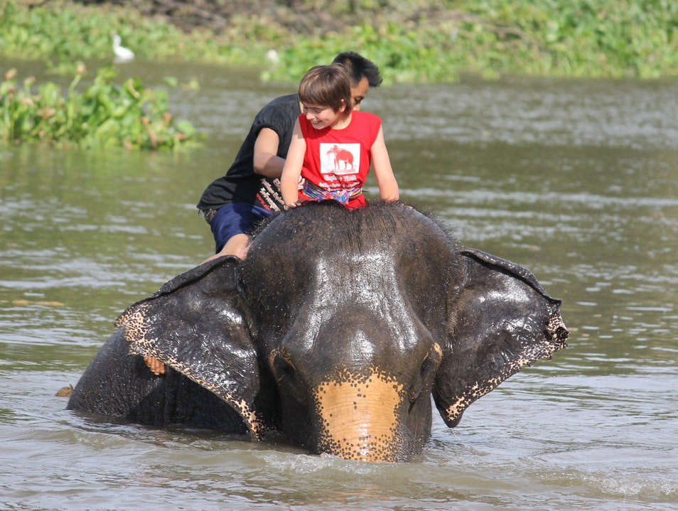 Magical hands on elephant experience. Phra Nakhon Si Ayutthaya  Thailand