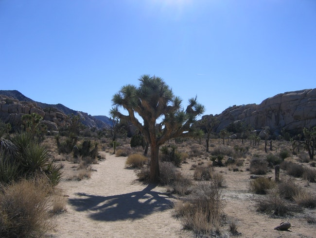 Hiking Under the Joshua Trees