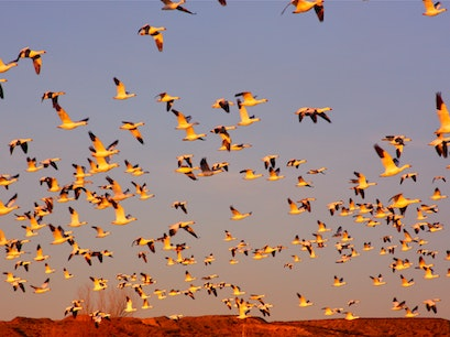 Friends of the Bosque del Apache National Wildlife Refuge San Antonio New Mexico United States