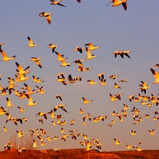 Friends of the Bosque del Apache National Wildlife Refuge
