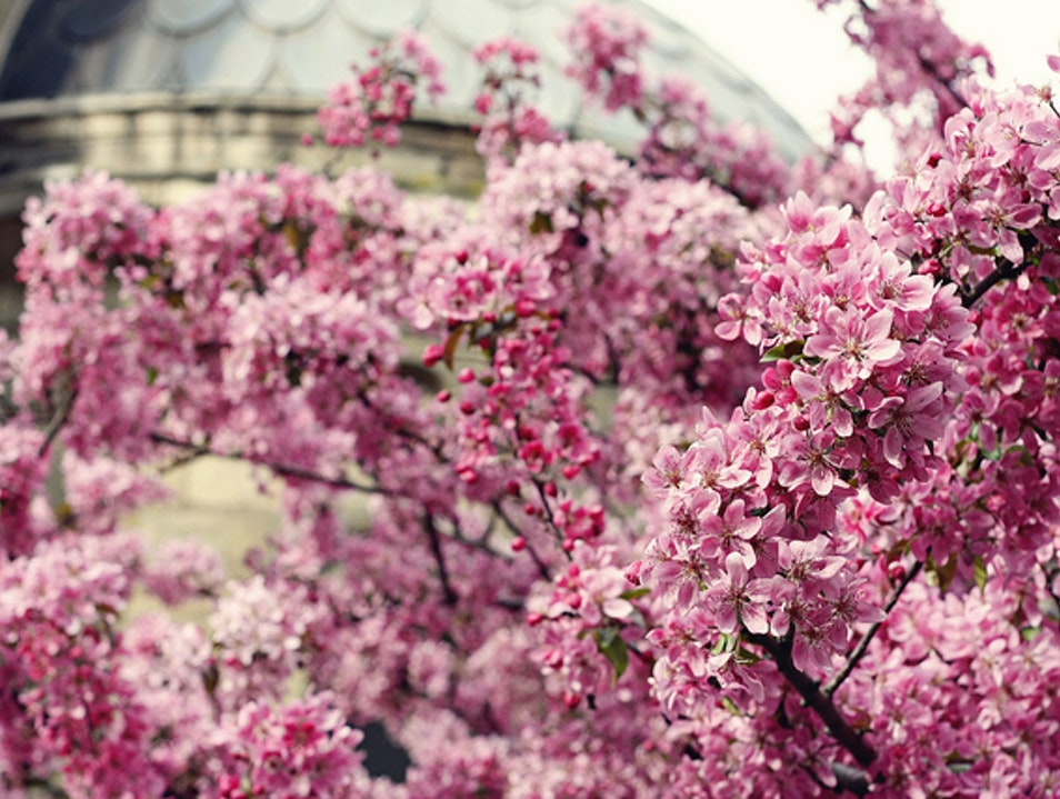 A brief but stunning taste of spring in Paris Paris  France