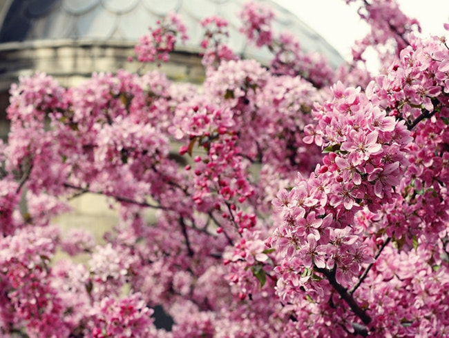 A brief but stunning taste of spring in Paris