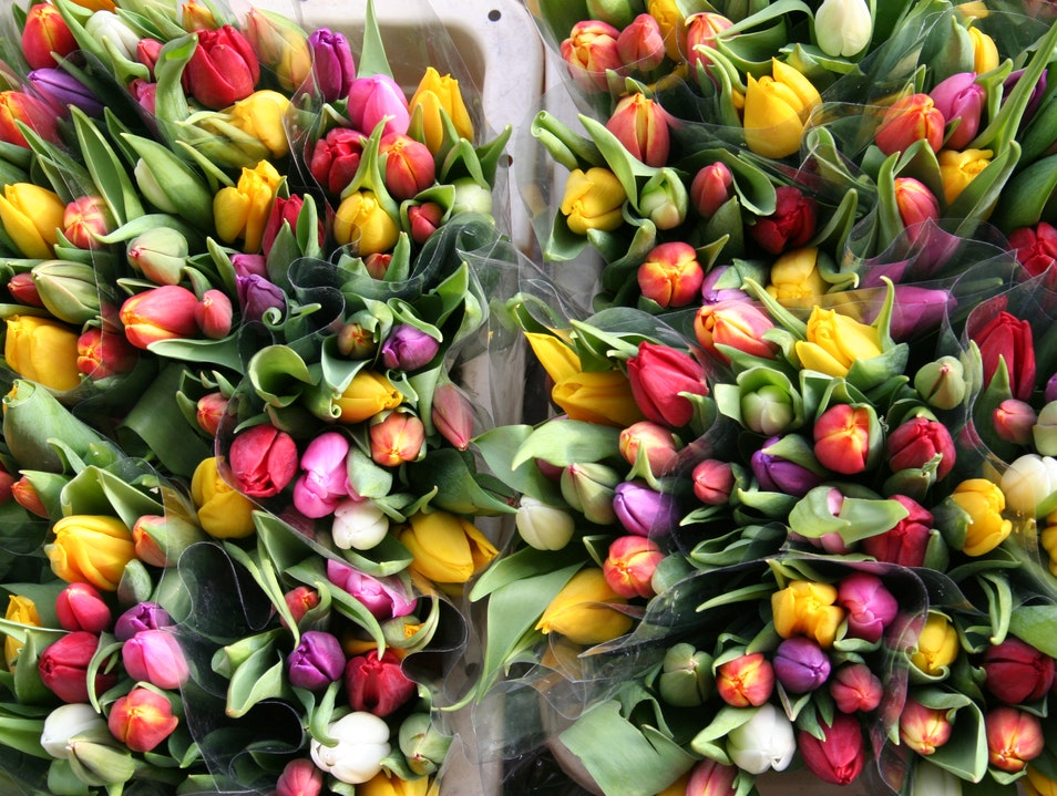 Tulipsssss! Amsterdam  The Netherlands