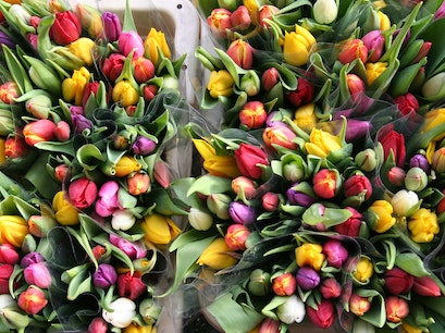 Flower Market (Bloemenmarkt) Amsterdam  The Netherlands