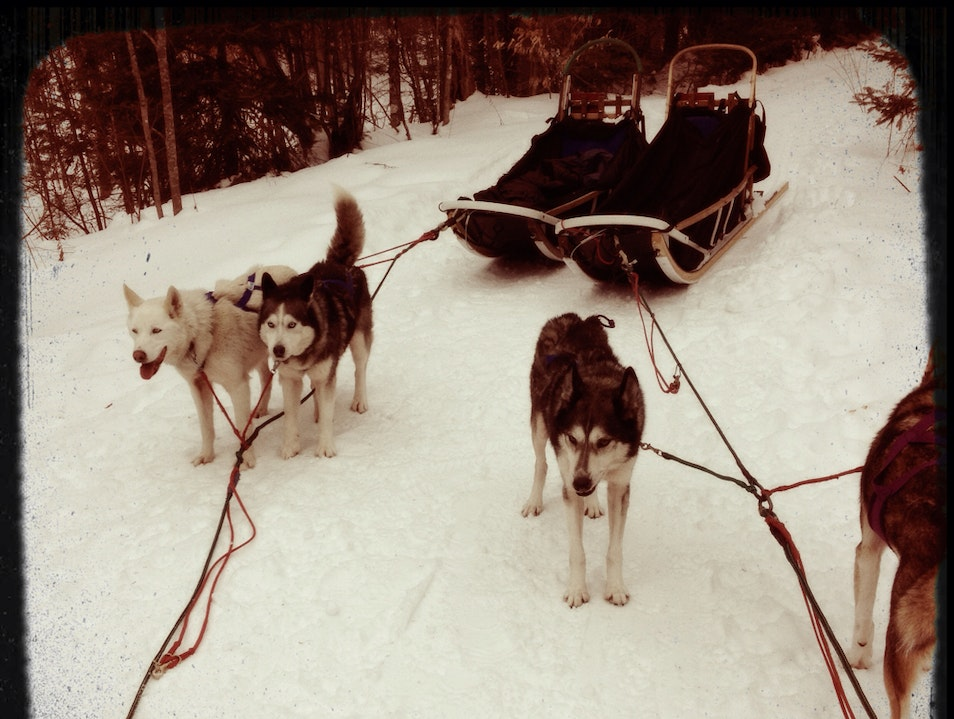 Dog Sledding In Vermont -  Elmore Vermont United States