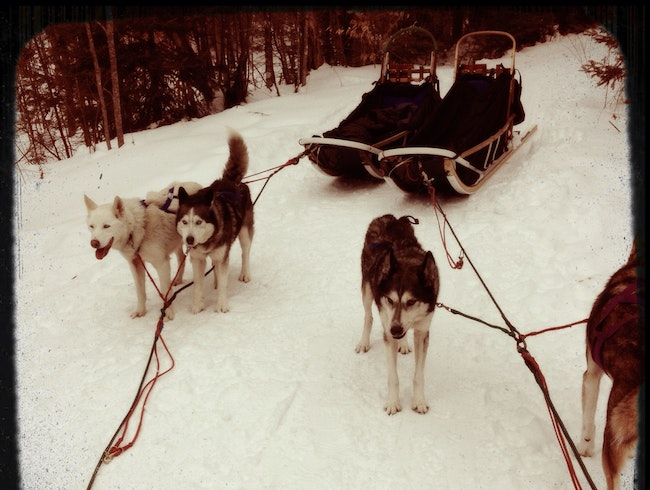 Dog Sledding In Vermont -