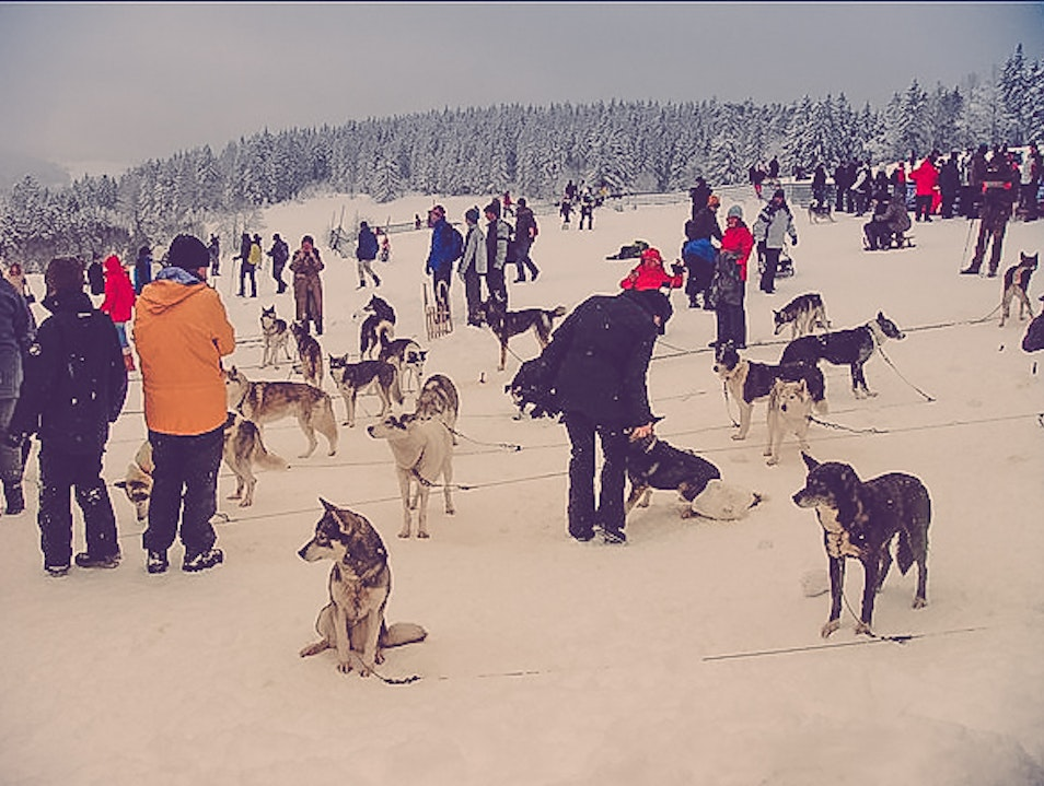 Dog sledding in the Black Forest Todtmoos  Germany