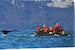 Alaska's Summer Visitors: Humpback Whales  Petersburg Alaska United States