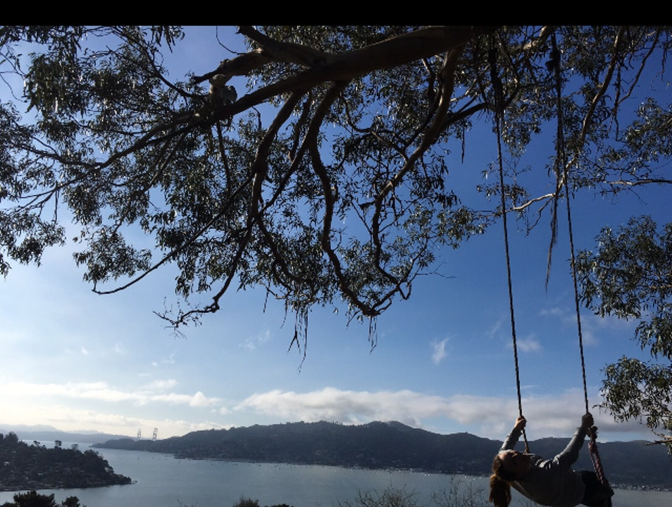 Hippie Tree Belvedere Tiburon California United States