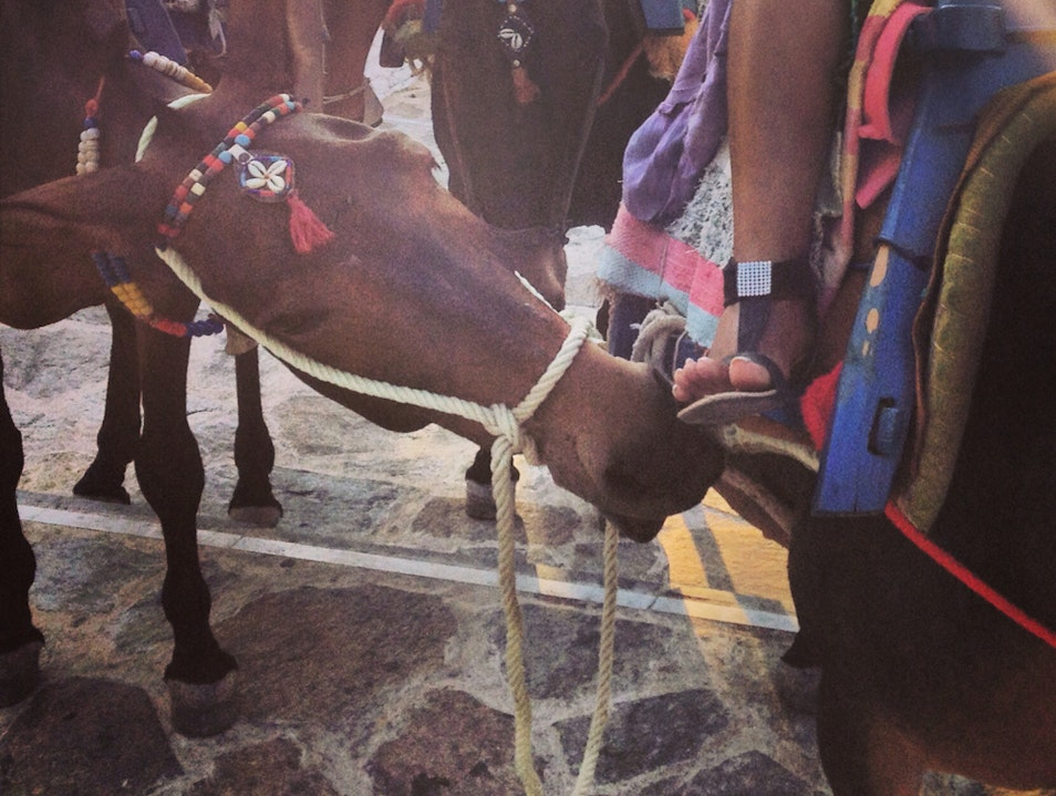 A Thrilling mule Ride Up The Village Steps Of A Greek Island Gialos  Greece