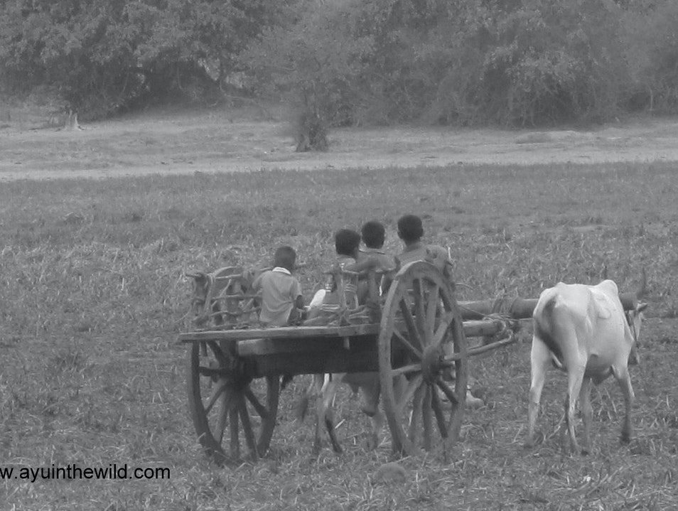 Life of a rural kid Trincomalee  Sri Lanka