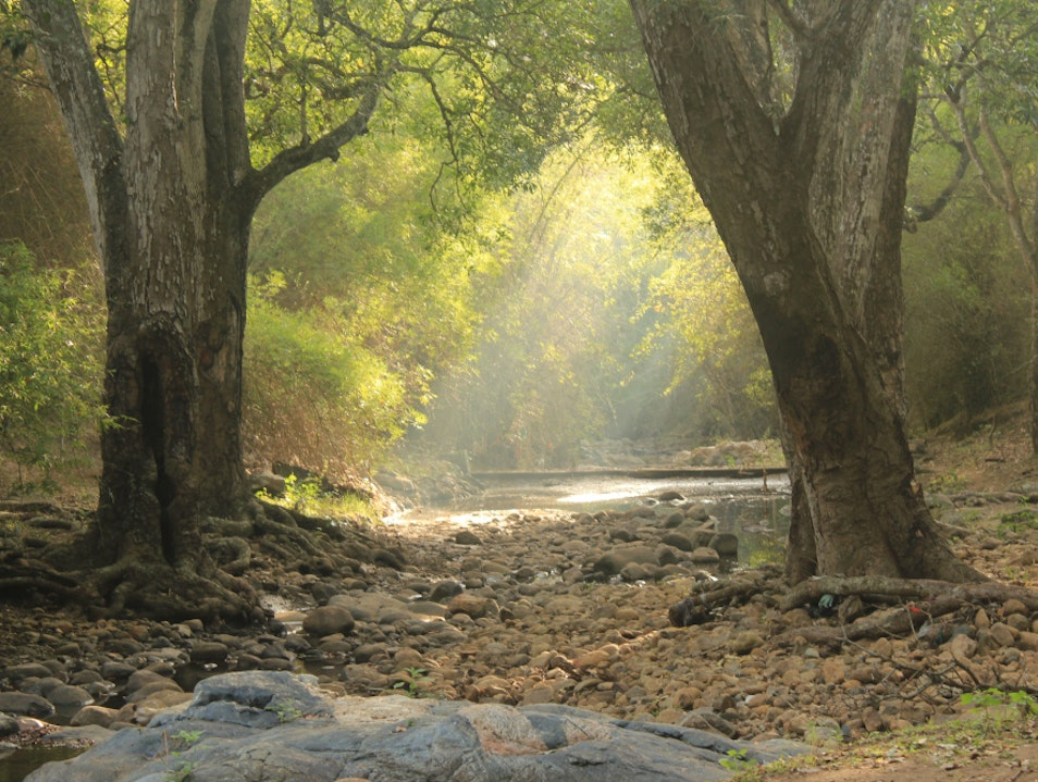 South India's National Parks