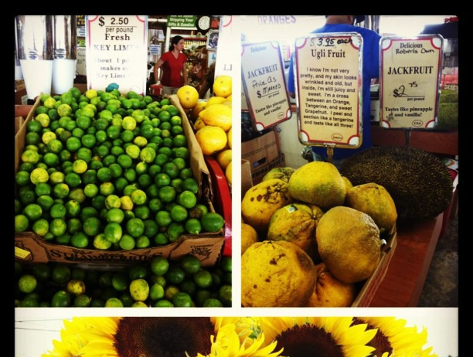 Sunflowers, Smoothies and Tropical Fruits Abound Homestead Florida United States