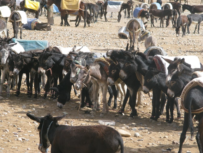 The weekly livestock market