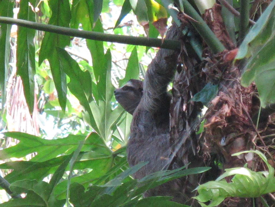 Sloth Sighting In Costa Rica