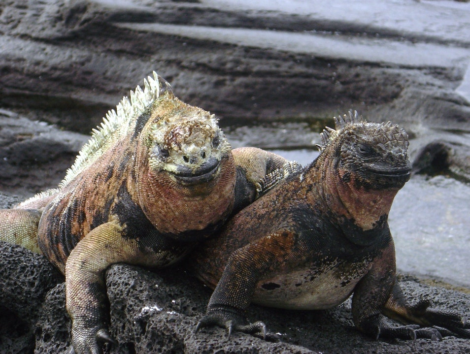 Met a Great Couple in the Galapagos Islands Puerto Ayora  Ecuador