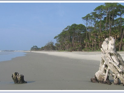 Hunting Island State Park St Helena Island South Carolina United States