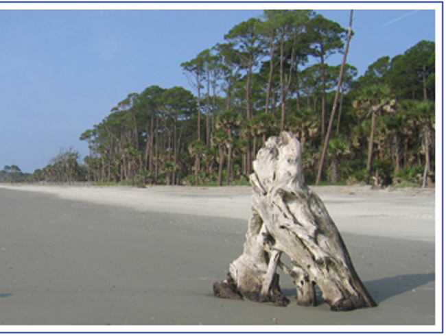 A serene, classic Lowcountry barrier island beach