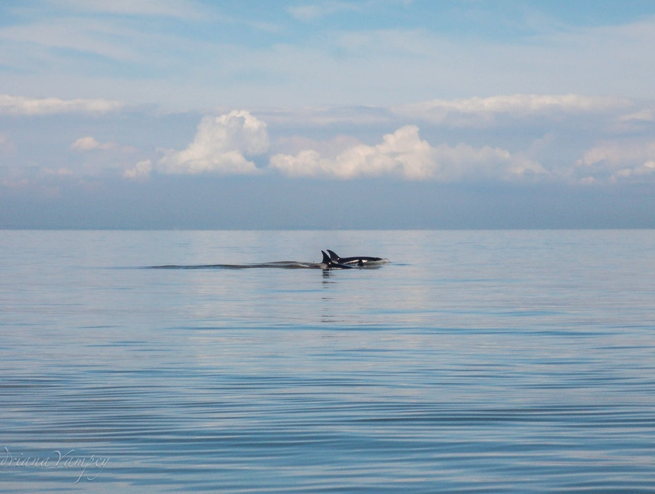 Whale-Watching in Vancouver