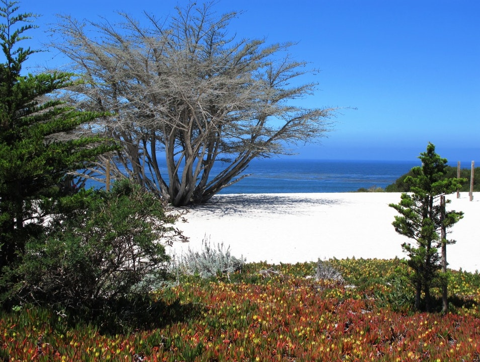 One Gorgeous Beach in Carmel on California's Coast Carmel California United States