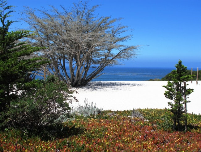 One Gorgeous Beach in Carmel on California's Coast