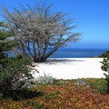 Carmel Beach Carmel California United States