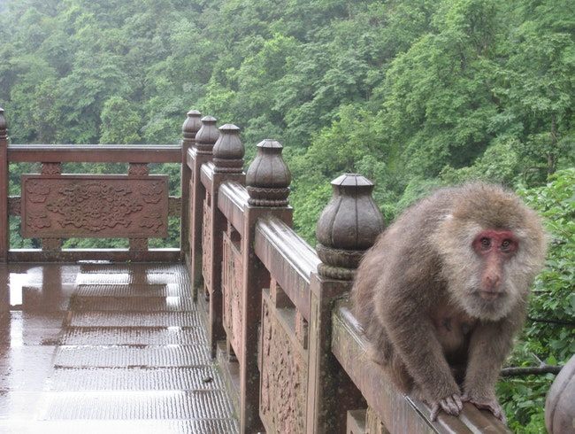 Wild Monkeys and Stairs