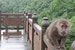 Wild Monkeys and Stairs Leshan  China