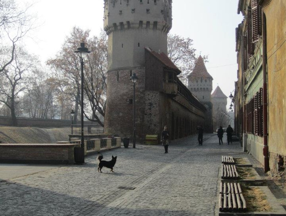 Sibiu's Gone to the Dogs