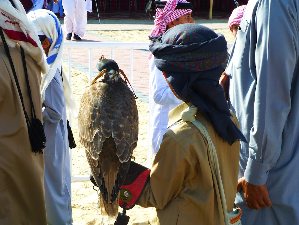 A Place to Watch a Falcon Auction Doha  Qatar