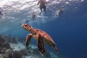 Bonaire National Marine Park