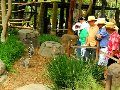 San Diego Zoo Safari Park Escondido California United States