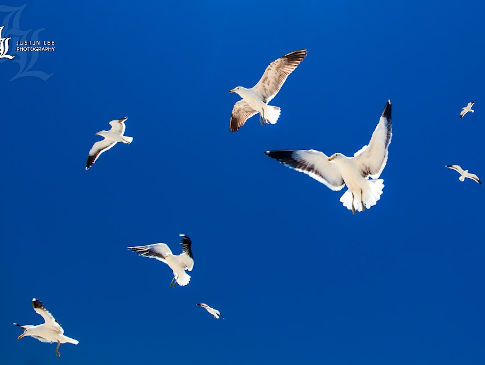 Crazy Seagulls Trying to Get Some Lunch!
