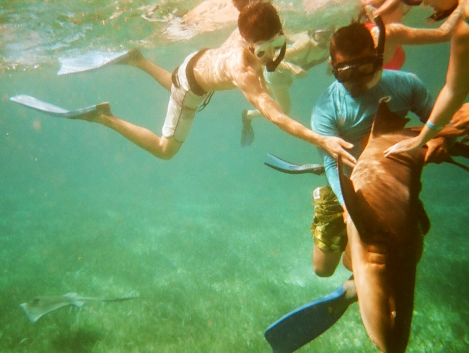 Sharks, Rays, Turtles, and Close Encounters   Belize