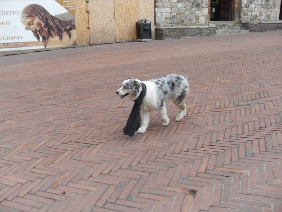 No Disheveled Dogs in the Piazzas