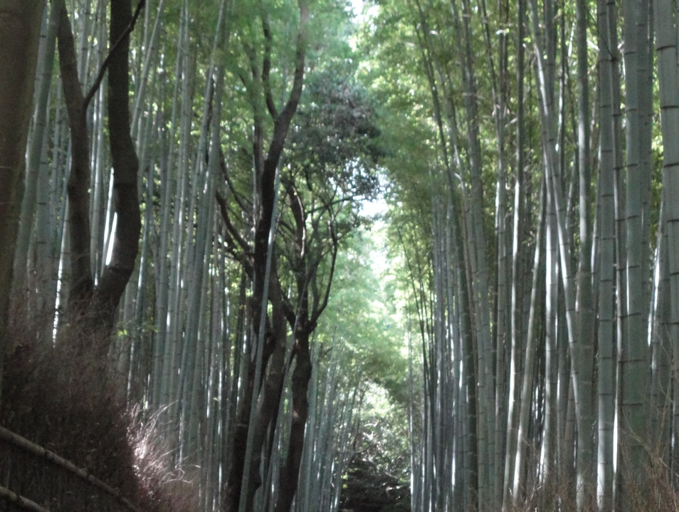 The Bamboo Forest Kyoto  Japan