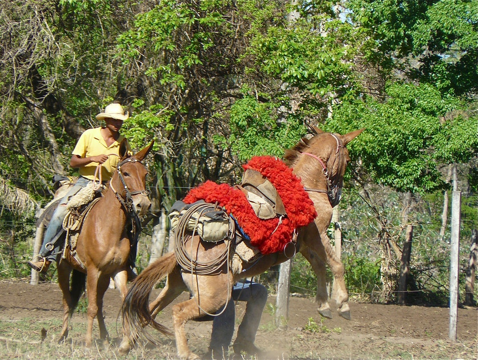 Cowboy up in the Pantanal Campo Grande  Brazil
