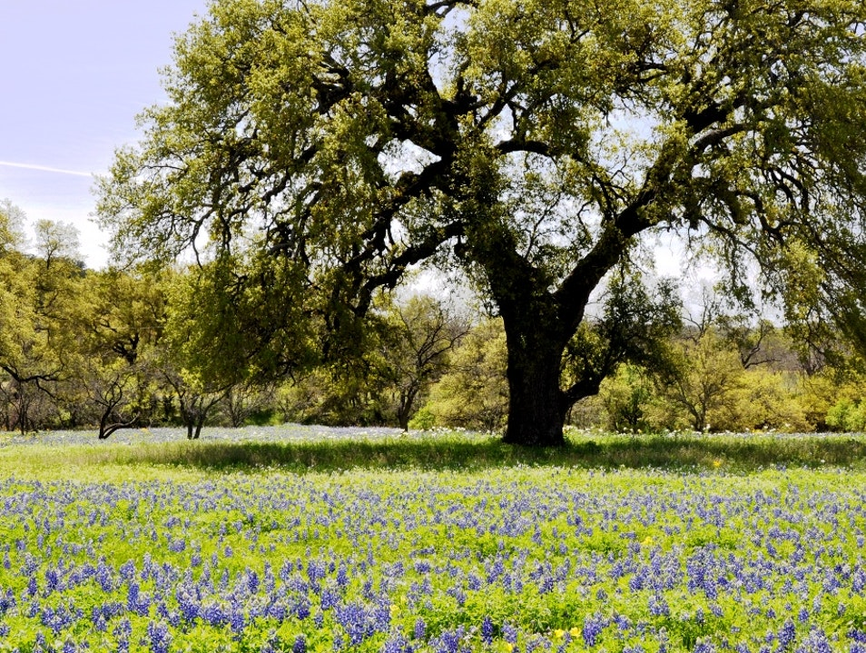 Hill Country In Bloom With Color Willow City Texas United States