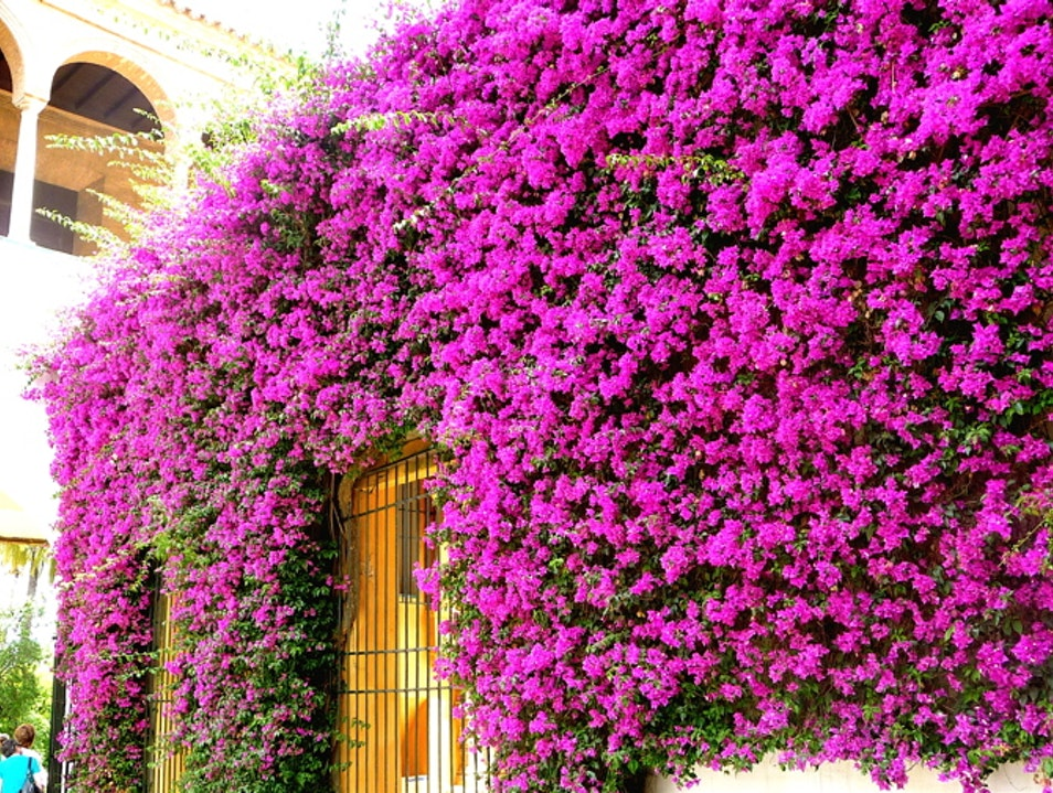 Vibrant color in the palace garden Seville  Spain