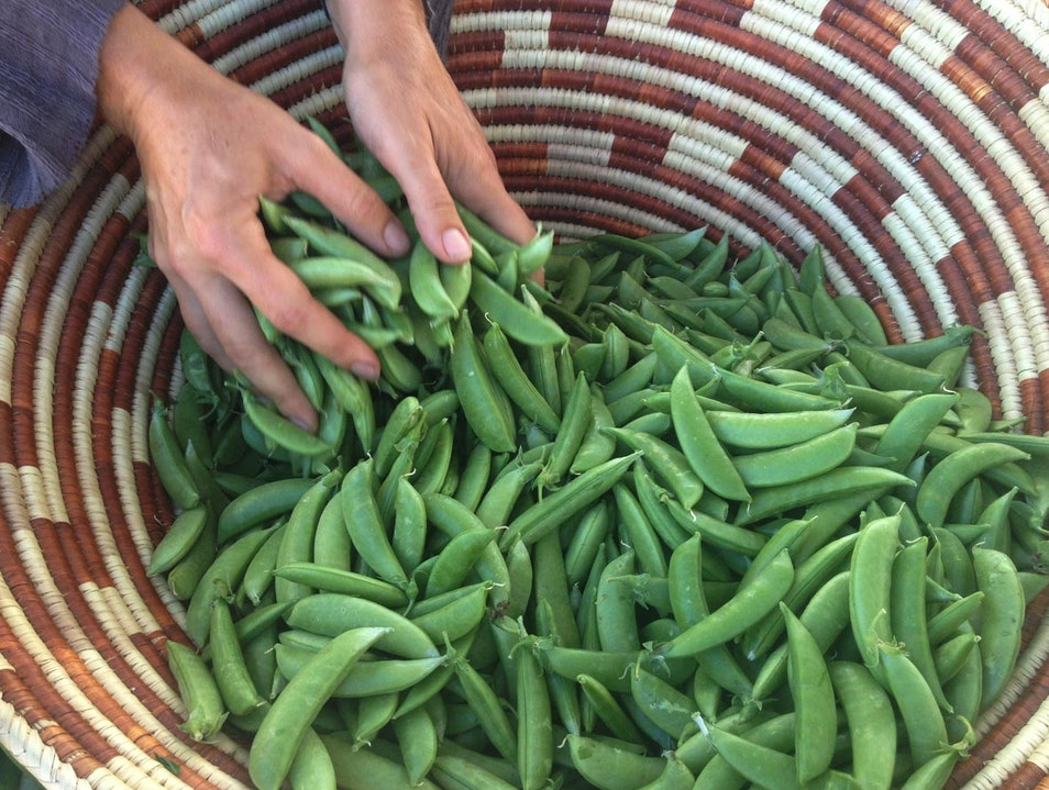 Nature's Bounty: New Mexican Colors, Textures, Aromas