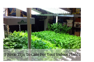 7 Basic Tips To Care For Your Indoor Plants