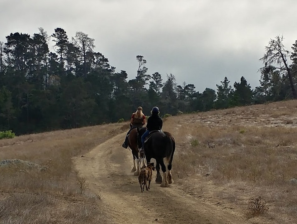 Healthy Eating & Clydesdale Horseback Riding Cambria California United States
