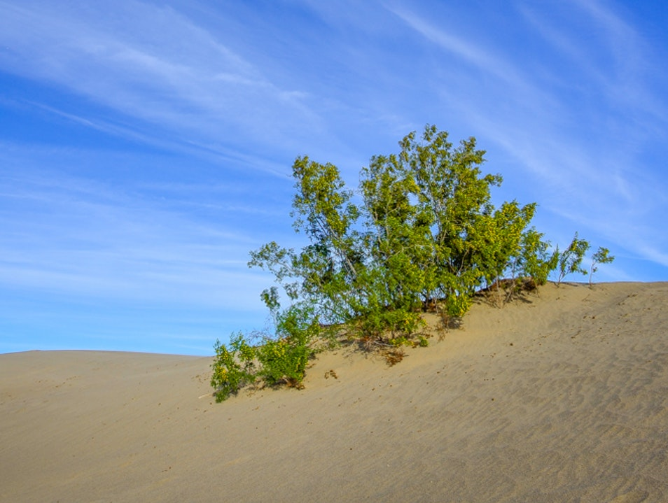 Sand, mesquite and big blue sky  Death Valley National Park California United States