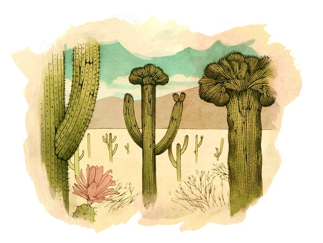 Visit the Cacti