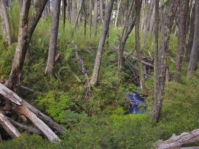 Ancient Forests Punta Arenas  Chile